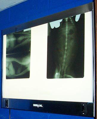 Darkroom X-Ray Viewer LARGE